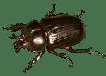 Дератизация жука короеда
