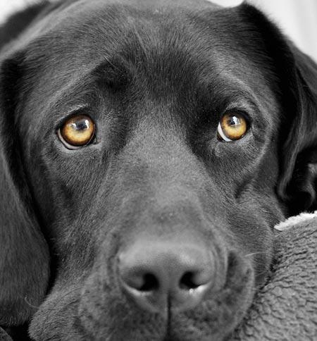 безопасность собаки от клещей