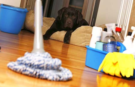 дезинфекция домашних животных