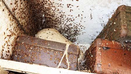 много насекомых-вредителей
