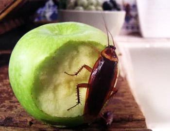 на яблоке